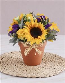 flowers: Sunshine in a Ceramic Pot!