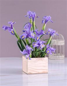 flowers: Box of Blue Irises!