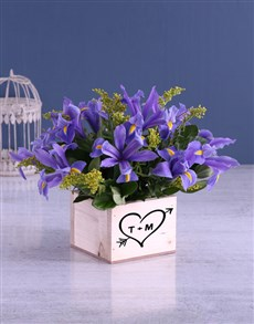 gifts: Blue Irises In Cupid Wooden Box!