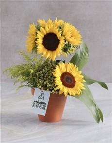 flowers: Good Luck Sunflower Lollipop Tree!
