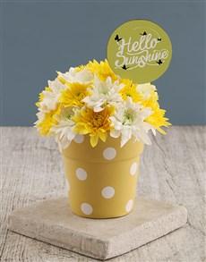 flowers: Hello Sunshine Sprays In Sunny Pot!