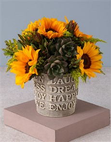 flowers: Superb Sunflowers and Succulents!