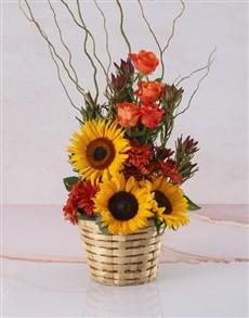 flowers: Rays Of Sunflowers Basket!