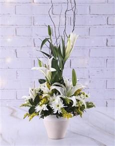 flowers: Elegant Lilies In Ceramic Pot!