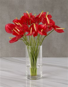 plants: Arrangement Of Amazing Anthuriums!
