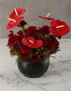 plants: Burning Bright Anthurium Arrangement!