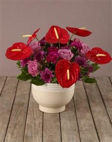 flowers: Rainbow Of Blooms Anthurium Arrangement!