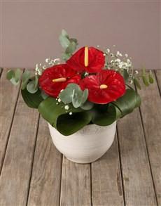 flowers: Effortless Elegance Anthurium Arrangement!