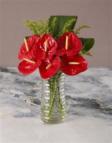 flowers: Ravishing Red Anthurium!