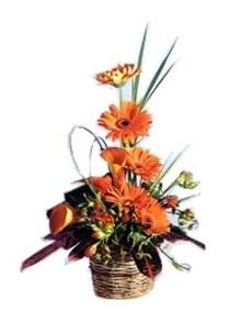 flowers: Orange Opiance Flower Treat!