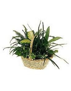 flowers: Plant Arrangement!