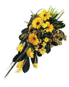 flowers: Golden Gerbera!