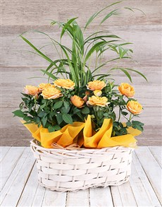 flowers: Double Rose Bush and Bamboo Basket!