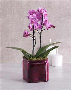 flowers: Mini Phalaenopsis Orchid in a Pink Vase!