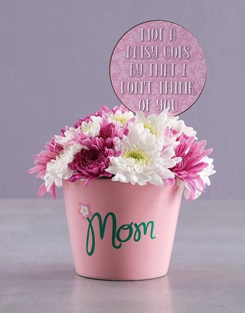 edible-chocolate-arrangements: Not a Daisy Spray Pot for Mom!