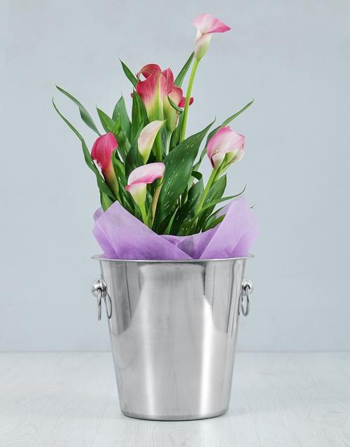 colour: Pink Zantedeschia Ice Bucket!