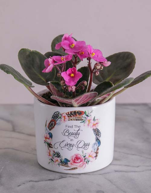 colour: Mothers Day African Violet!