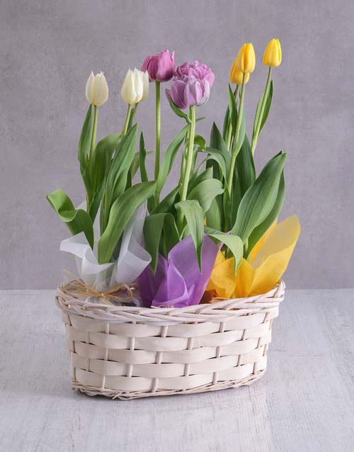 colour: Mothers Day Tulips In Basket!