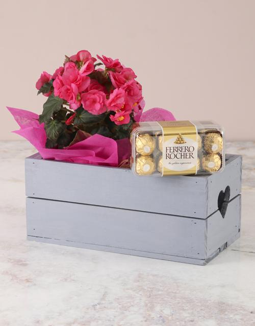 begonia: Pink Paradise Begonias And Ferrero Hamper!