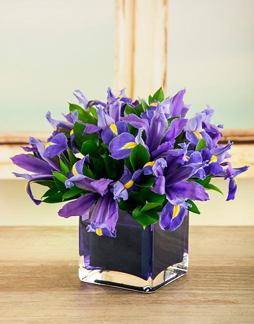 apology: Charming Irises in Square Vase!