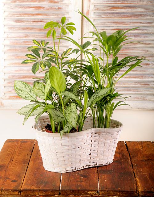 basket: Trio of Green Plants in a Basket!
