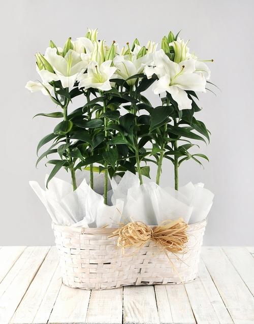 basket: Casablanca Lily Basket!