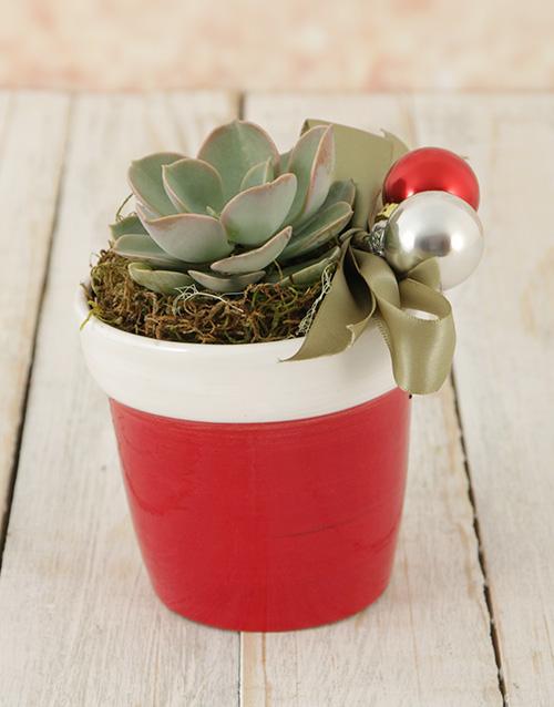 year-end: Santas Succulent Pot!