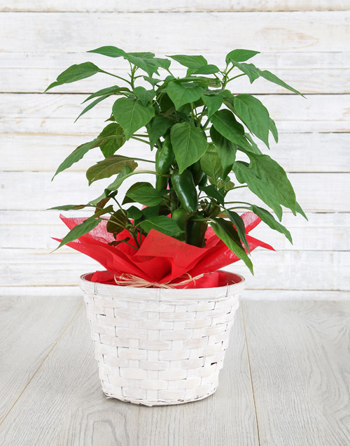 basket: Hot Mess Plant!