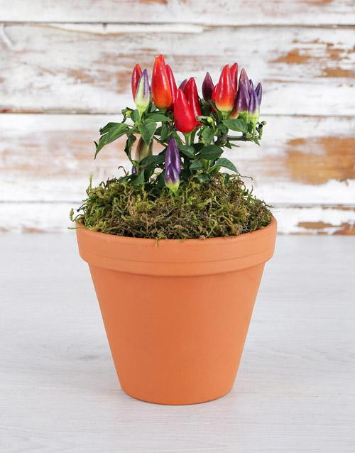colour: Spice It Up Chilli Pot!