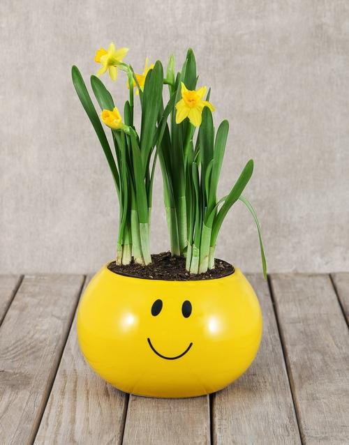 anniversary: Daffodil Plant in Smiley Pot!