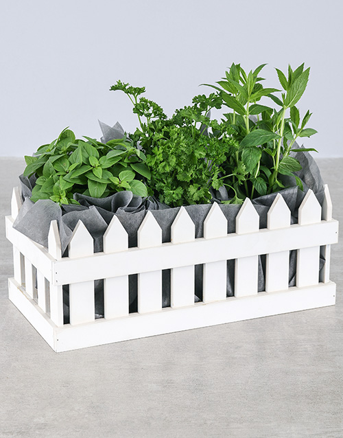 green: Picket Fence of Herbs!