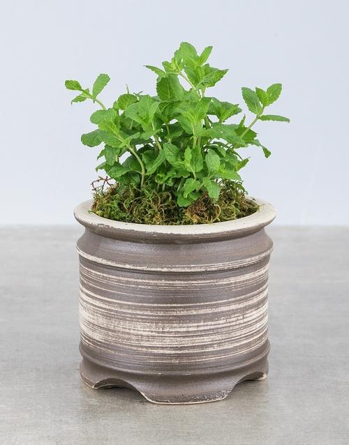 birthday: Mint Herbs in Ceramic Pot!