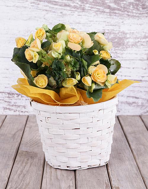 basket: Yellow Begonia Basket!