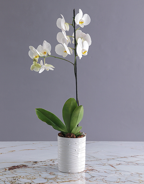 colour: Orchids in a Glazed Vase!