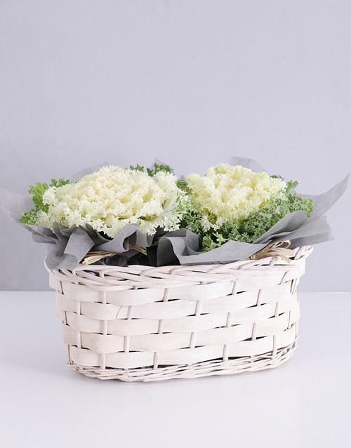 colour: Double White Kale Plant Basket!