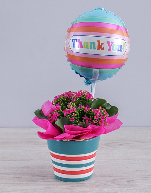 colour: Cerise Kalanchoe Plant and Thank You Balloon Gift!