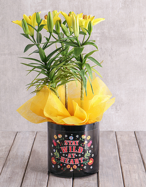 spring-day: Asiatic Lily in Stay Wild Vase!
