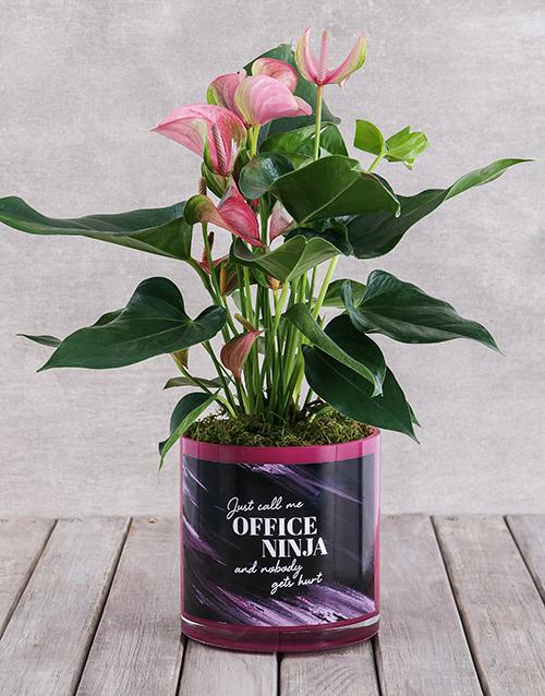 colour: Pink Anthurium in Office Ninja Vase!