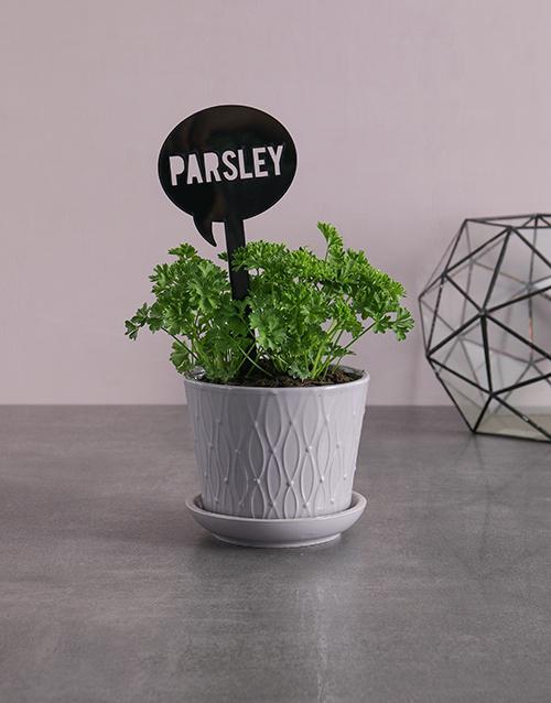 birthday: Herb Plant in Grey Pot!