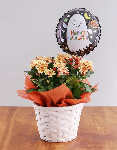 basket: Orange Halloween Crysanthimum Basket!