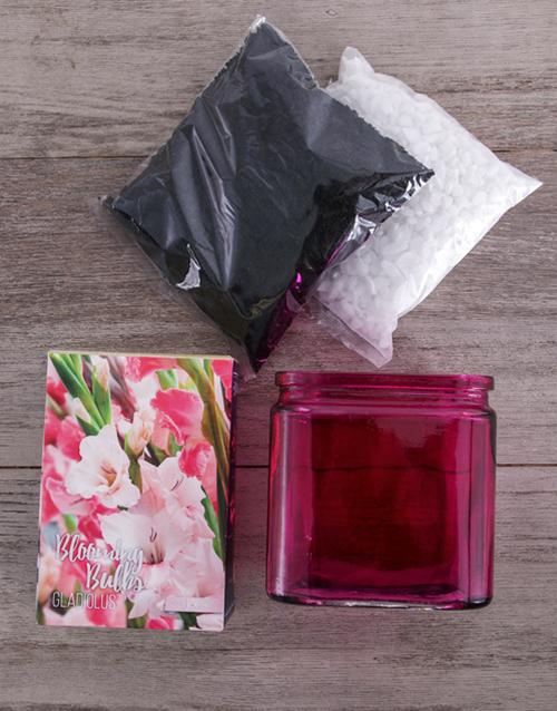 colour: Grow Your Own Gladiolus Flower Kit!