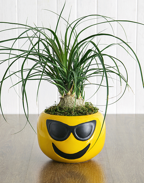 fathers-day: Pony Tail Palm in Sunglasses Emoji Pot!