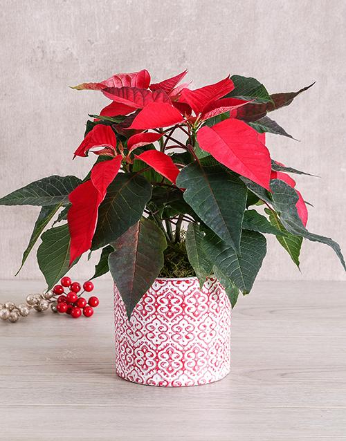 christmas: Red Poinsettia Pot!