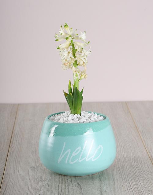 friendship: White Hyacinth in a Hello Pot!