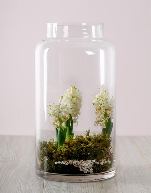 colour: White Hyacinths in a Terrerium Vase!