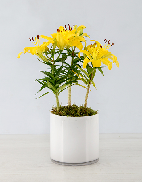 easter: Asiatic Lily in Cylinder Vase!