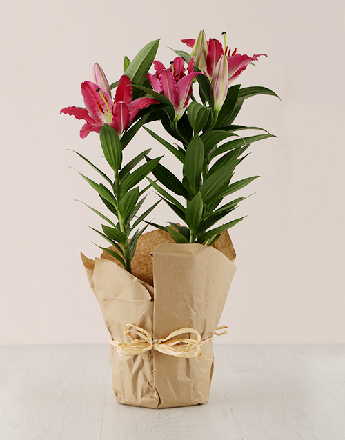 colour: Stargazer Lily in Craft Paper!