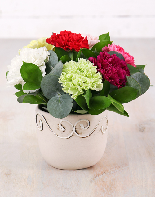 friendship: Potted Carnation Mix!