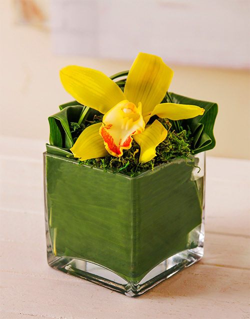 flowers: Single Orchid in Square Vase!