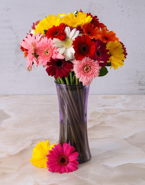 colour: Mixed Gerberas in a Purple vase!